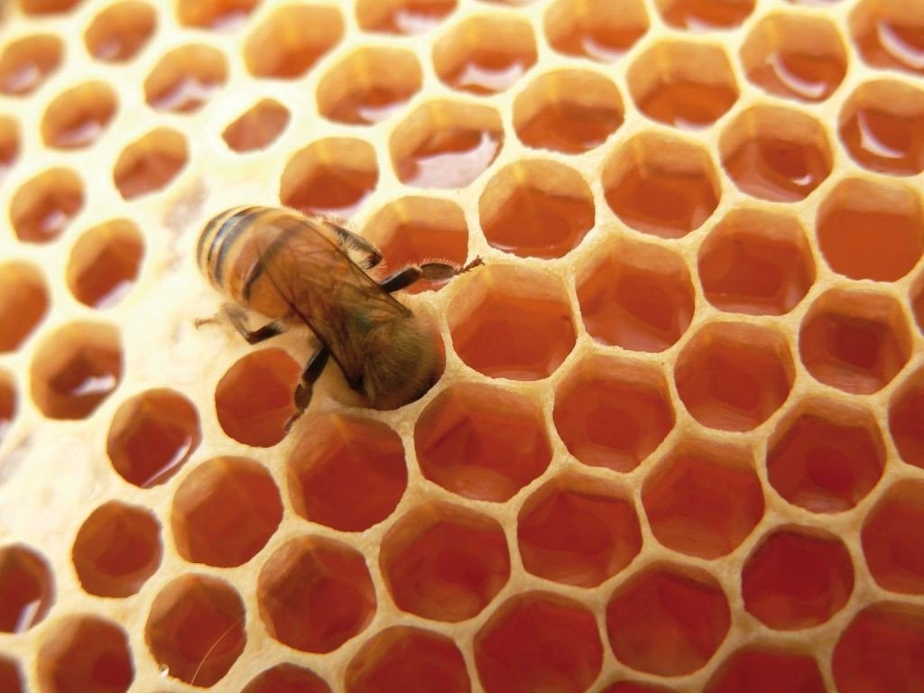 panal con abeja