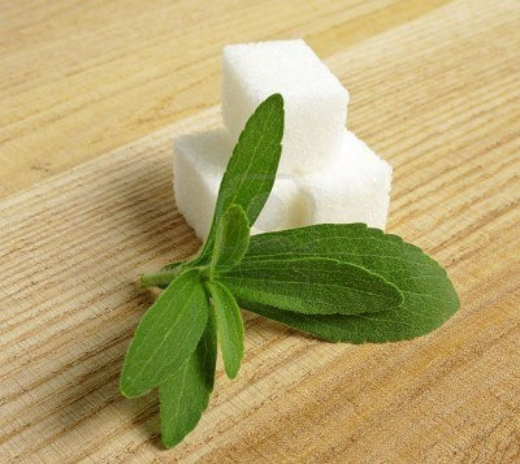 terrones hojas stevia