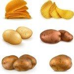 vector-patatas