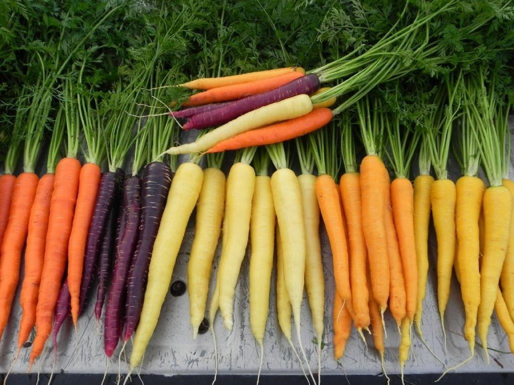 colores-zanahorias