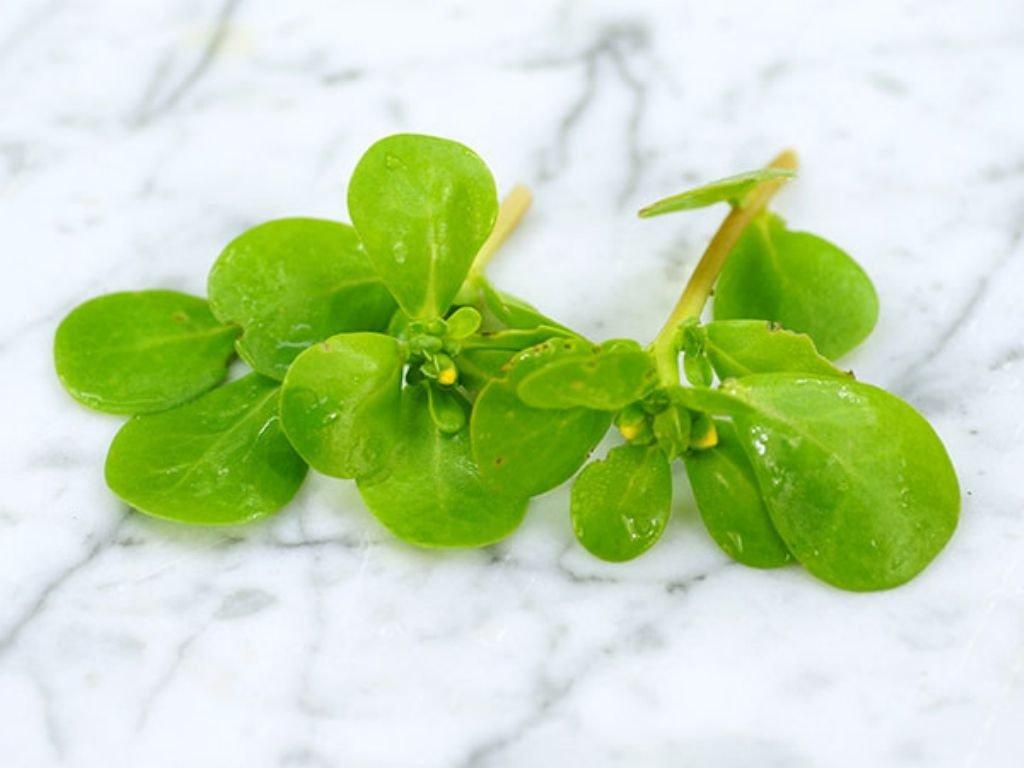 hojas-verdolaga