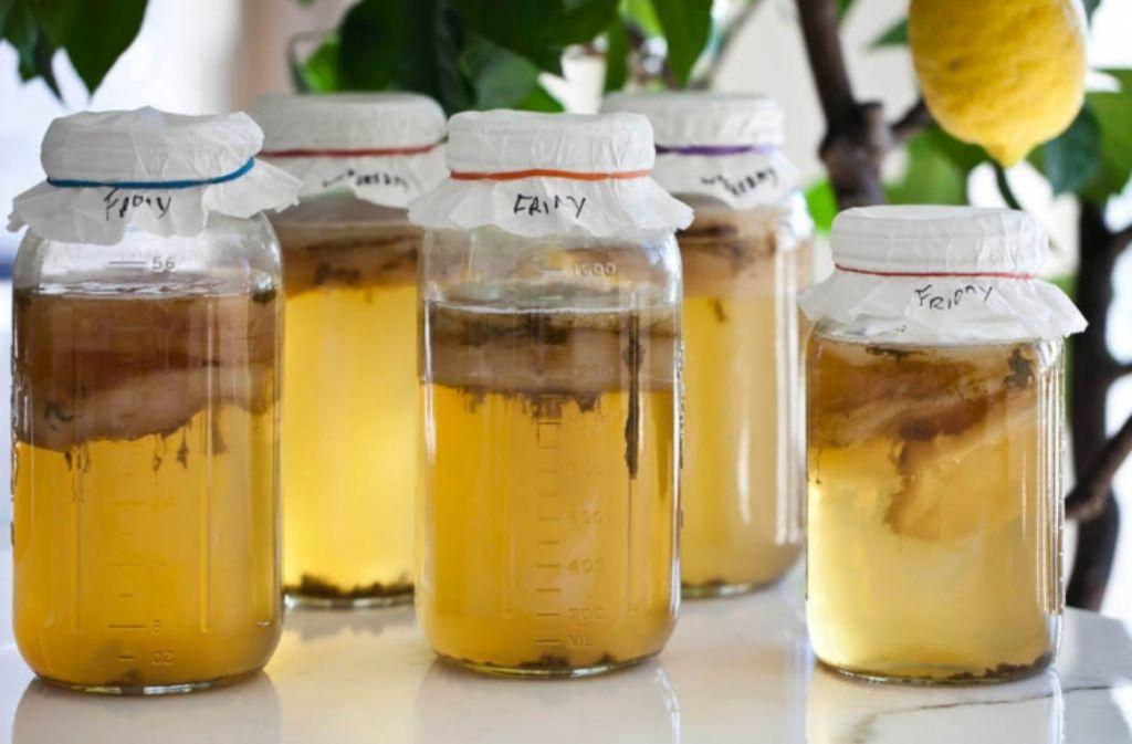 fermentacion-kombucha
