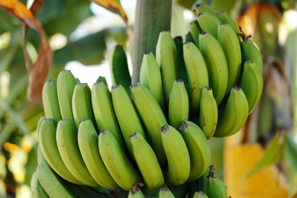 , 11 propiedades saludables del plátano basadas en estudios científicos