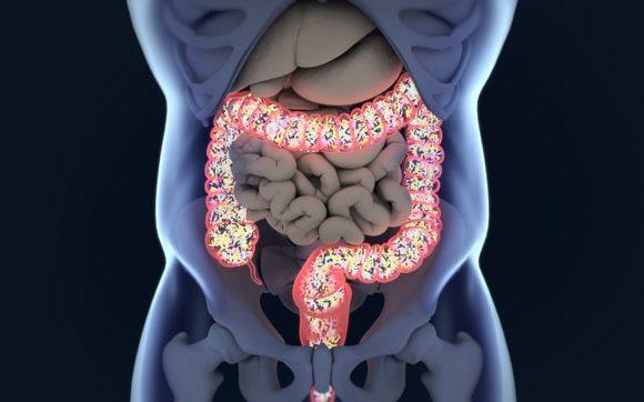 ¿Por Qué El Microbioma Intestinal Es Crucial Para Su Salud?