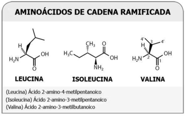 , Beneficios del AACR: Revisión de los Aminoácidos de Cadena Ramificada