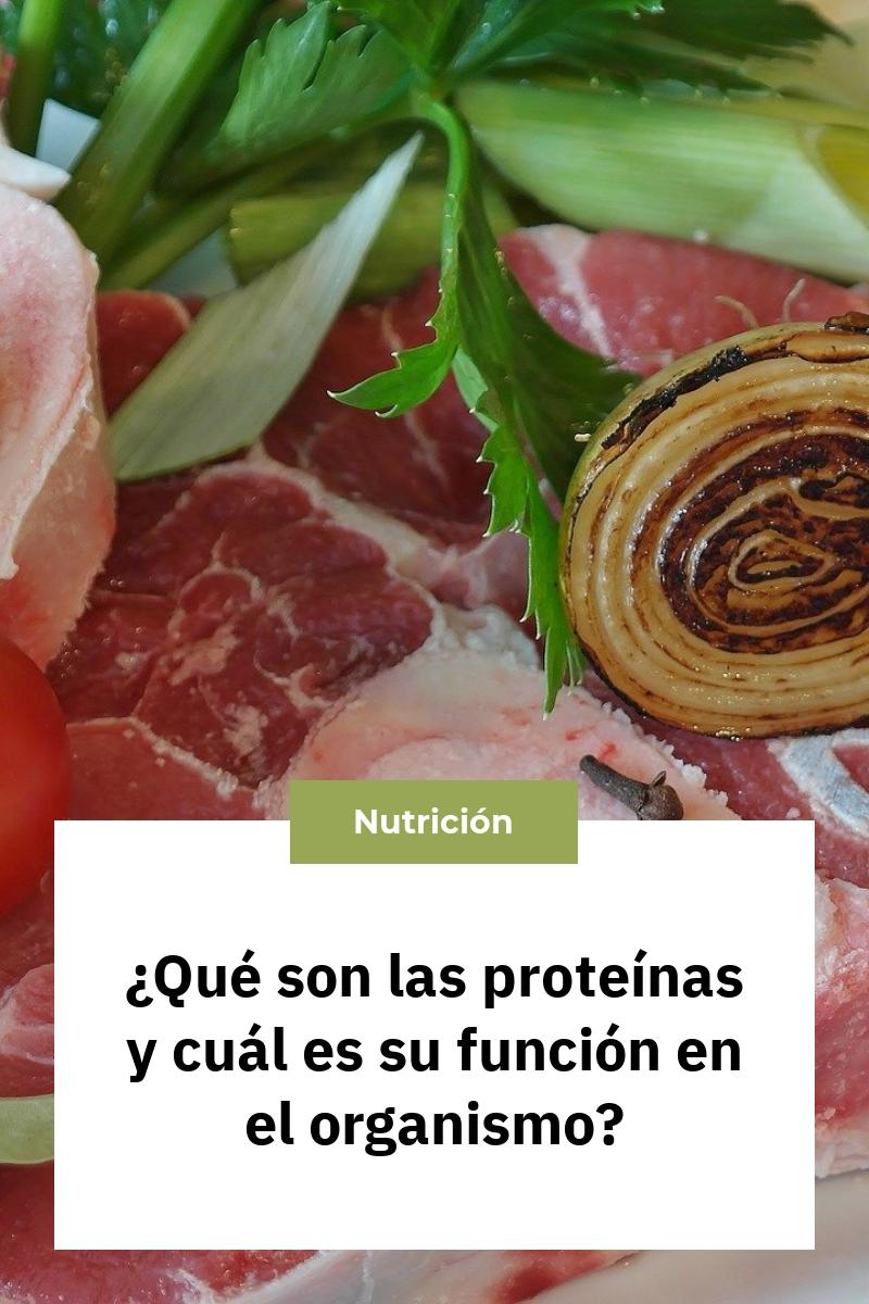 ¿Qué son las proteínas y cuál es su función en el organismo?