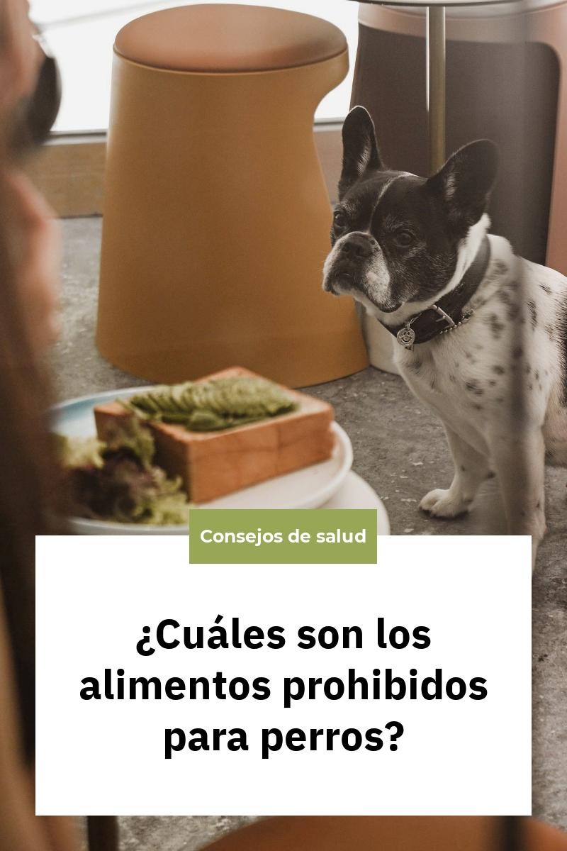 ¿Cuáles son los alimentos prohibidos para perros?