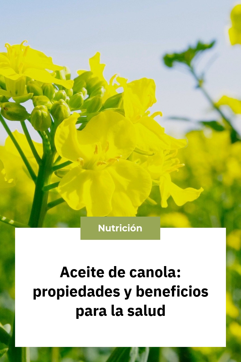 Aceite de canola: propiedades y beneficios para la salud