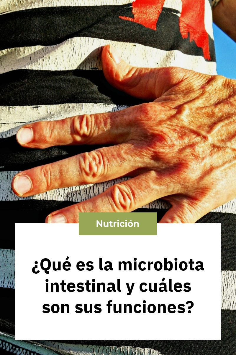 ¿Qué es la microbiota intestinal y cuáles son sus funciones?